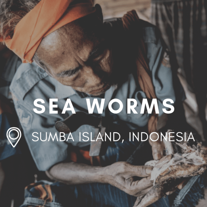 Celebrating the Arrival of Sea Worms with the Sumbanese